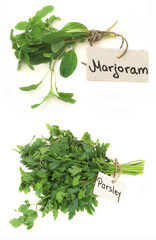 Parsley and Marjoram herbs