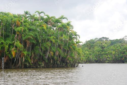Rainforest from the river, Amazonia, Ecuador