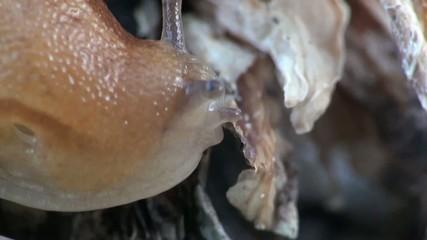 Snail slime macro