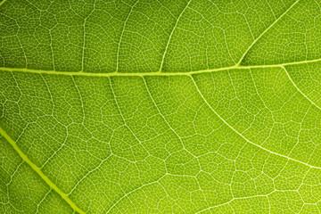 Blattadern netzwerkstruktur der natur