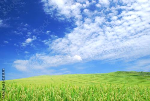 Fototapeten,grün,feld,garten,draußen