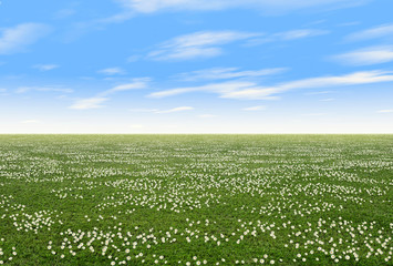 Field with flowers in spring with blue sky