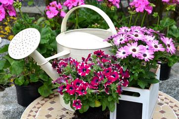 Frühling Garten Pflanzen