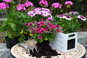 Frühling Blumenkasten Erde