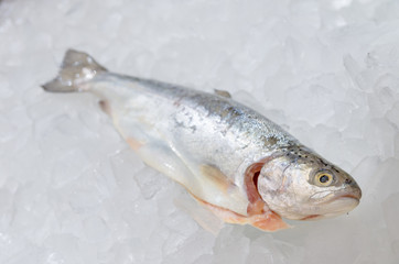 Pacific salmon on ice