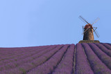 Lavendelfeld mit Mühle