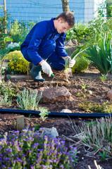 Farmer planting an iris