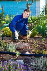Male farmer planting an iris flower