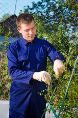Male gardener tying branches