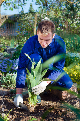 Farmer planting an iris flower