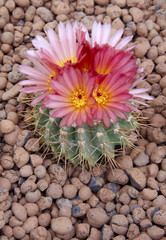 cactus_6