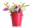 Beautiful wild flowers in .pail, isolated on white
