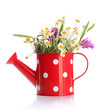 Beautiful wild flowers in watering can, isolated on white