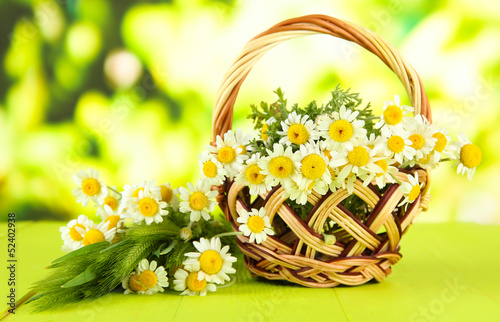 Wild camomiles and spikelets in basket, on green background