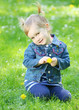 Cute girl dressed in jeans with a dandelion in a grass.