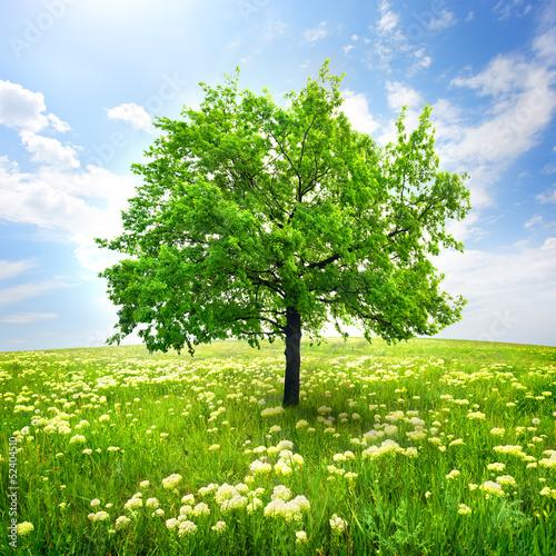 Fototapeten,baum,blume,wildflowers,himmel