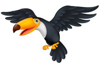 Toucan bird cartoon flying