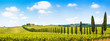 Leinwanddruck Bild - Beautiful landscape with vineyard, Chianti, Tuscany, Italy