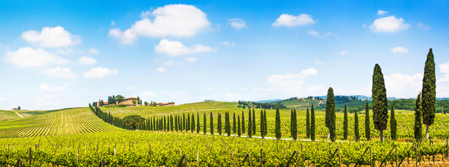 Beautiful landscape with vineyard, Chianti, Tuscany, Italy