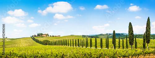 Leinwandbild Motiv Beautiful landscape with vineyard, Chianti, Tuscany, Italy