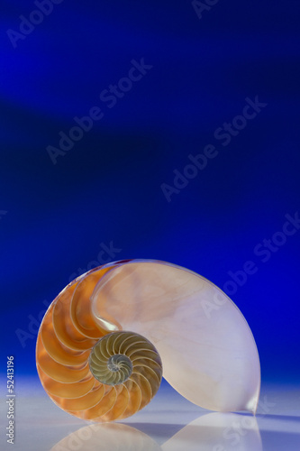Section of Nautilus on blue background
