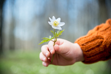 Child with spring flower, metaphor for freshness and giving