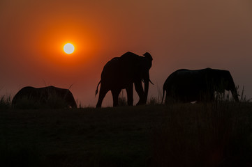Evening Elephants