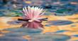 ninfea fiore acquatico 9275 - 52414911