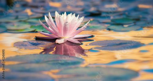 Fotobehang Water planten ninfea fiore acquatico 9275