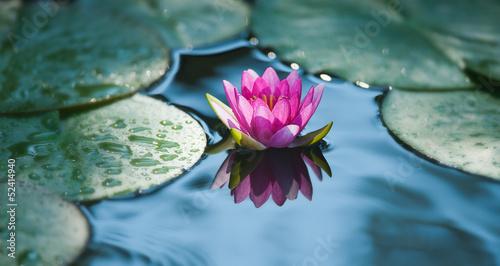 Aluminium Water planten ninfea fiore acquatico 9303