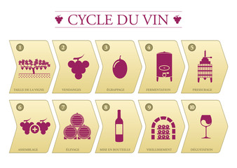 Cycle du vin
