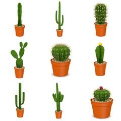 3d render of cactus flowers in pots