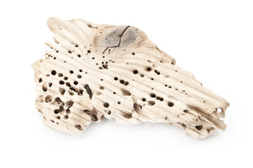 A piece of wood with termite holes on white background.