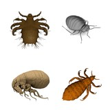 collection of 3d renders - parasites