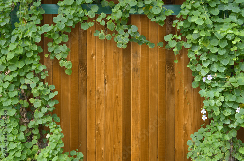 Ivy bush on wooden fence background.