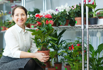 woman in flower shop with anthurium