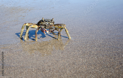 Closeup of Crab on a wet sandy beach