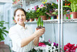 woman looks hyacinth at flower store