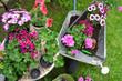 Obrazy na płótnie, fototapety, zdjęcia, fotoobrazy drukowane : Blumen Garten Pflanzen