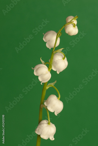 Poster Lelietje van dalen lily of the valley