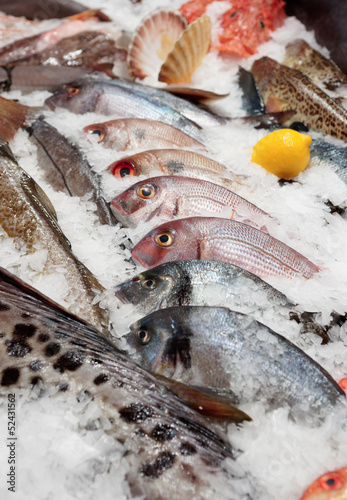 Wide selection of fish on market display