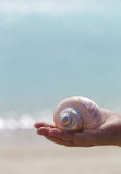 White seashell on palm with blue background