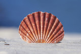 Colorful seashell on sand with blue background