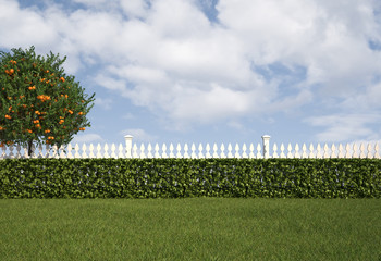 Garden with fence and hedge