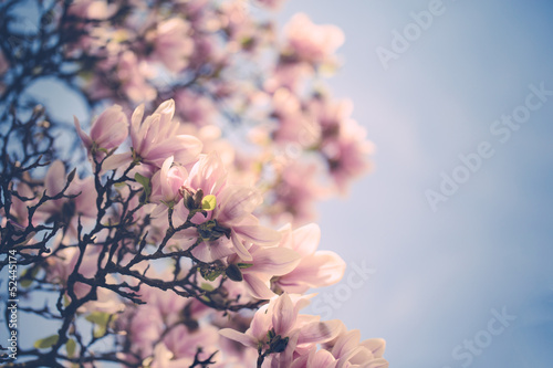 Keuken foto achterwand Magnolia Magnolien