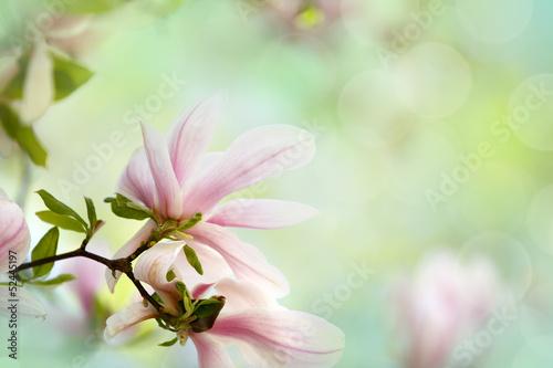 Fotobehang Magnolia Magnolien