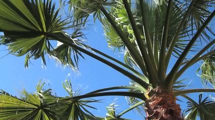 Palmenblätter im Wind