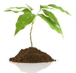 jeune arbre