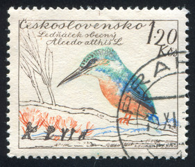 European kingfisher