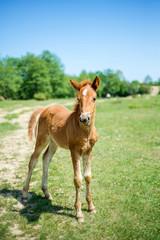 лошади-3